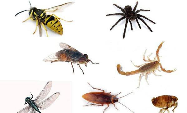 insectos-ejemplos
