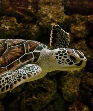 ejemplos-animales-acuaticos