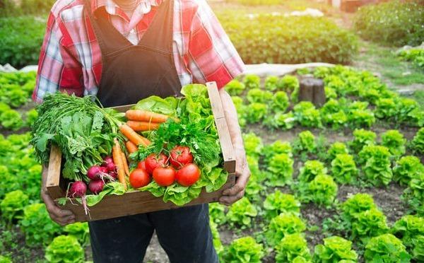 Ejemplos de alimentos orgánicos